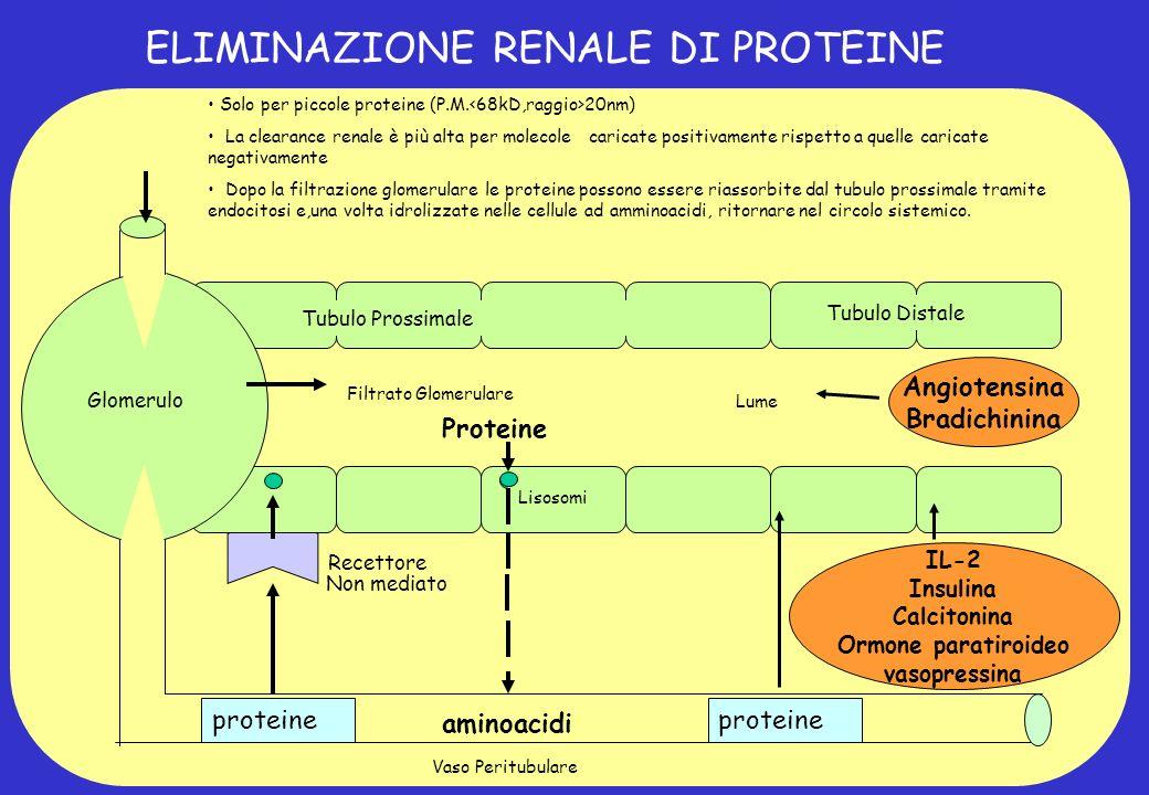 ELIMINAZIONE RENALE DI PROTEINE