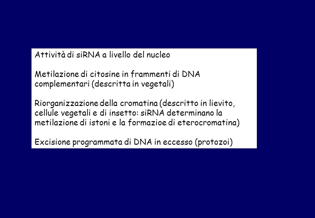 Attività di siRNA a livello del nucleo