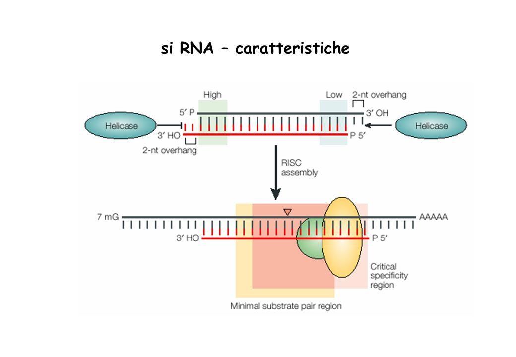 si RNA – caratteristiche