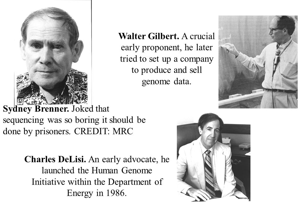 Walter Gilbert. A crucial early proponent, he later tried to set up a company to produce and sell genome data.