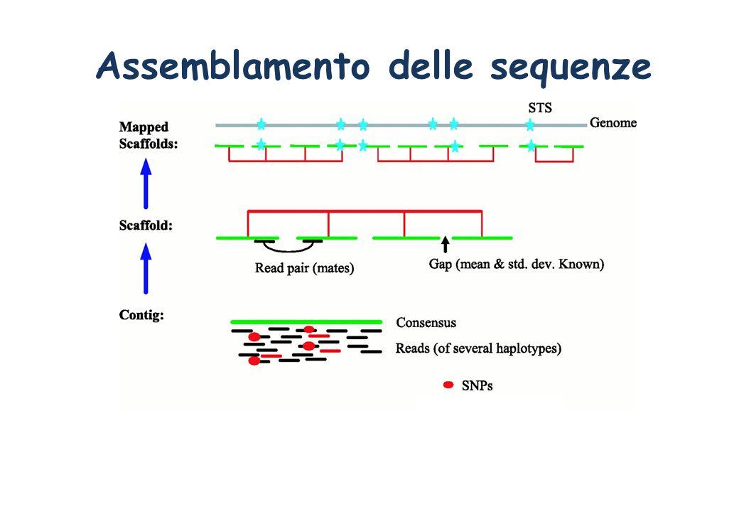 Assemblamento delle sequenze