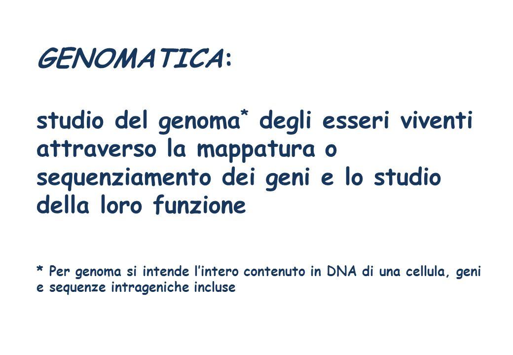 GENOMATICA: studio del genoma* degli esseri viventi attraverso la mappatura o sequenziamento dei geni e lo studio della loro funzione.