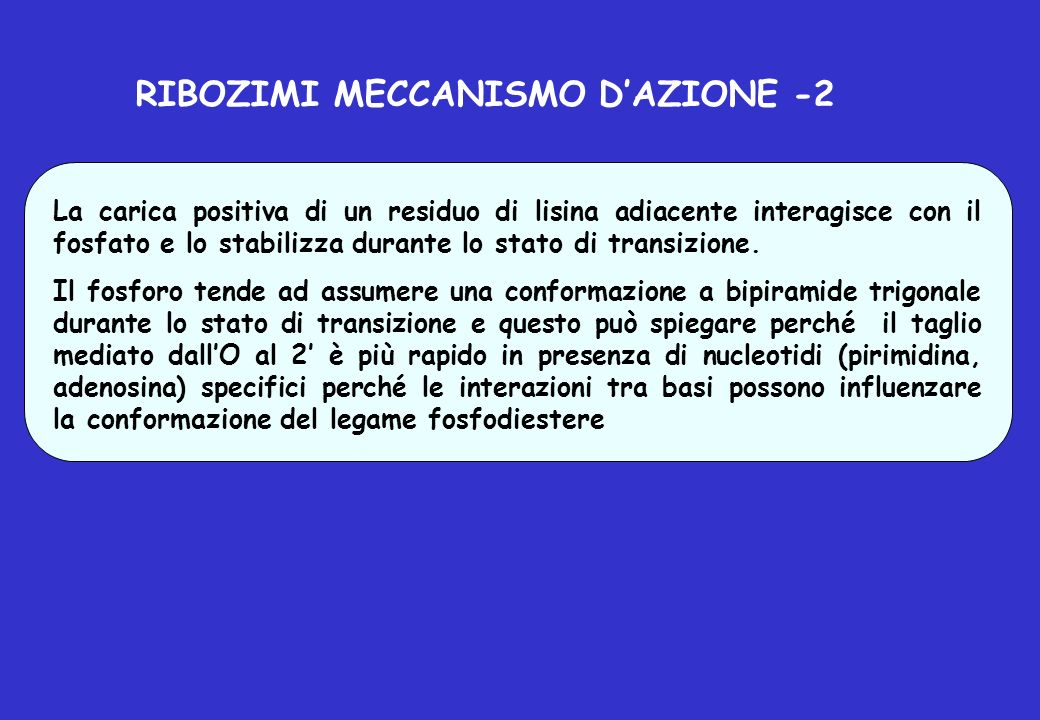 RIBOZIMI MECCANISMO D'AZIONE -2