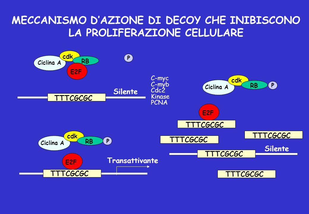 MECCANISMO D'AZIONE DI DECOY CHE INIBISCONO LA PROLIFERAZIONE CELLULARE
