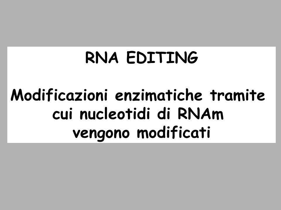 Modificazioni enzimatiche tramite