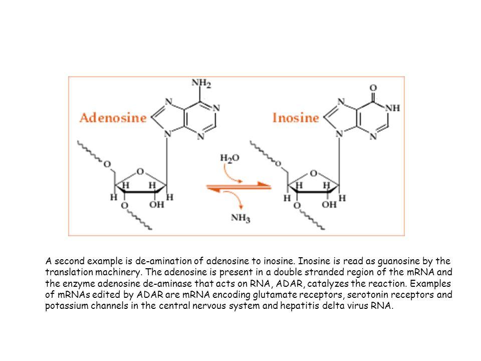 A second example is de-amination of adenosine to inosine
