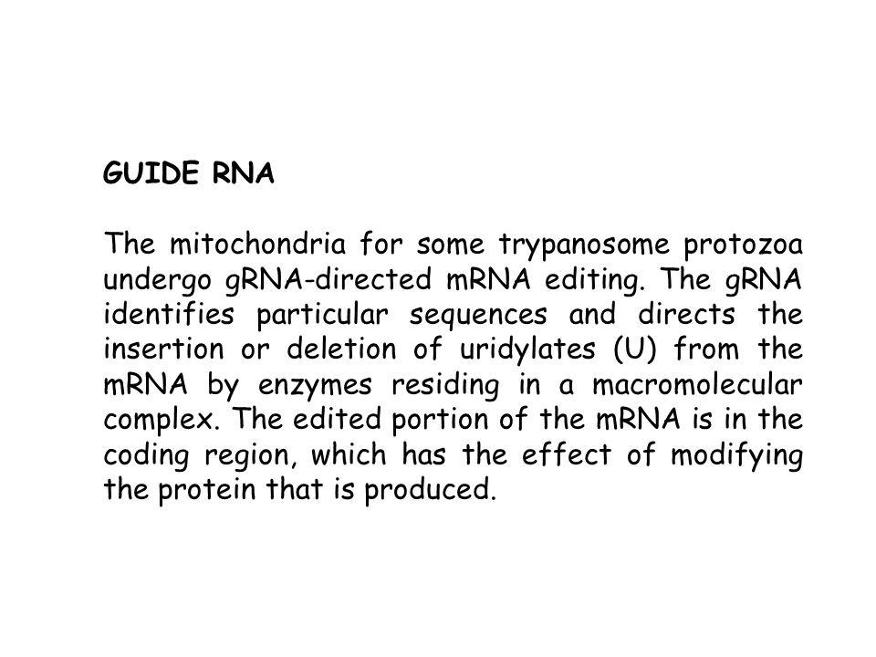 GUIDE RNA