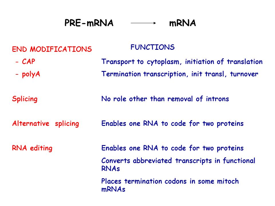 PRE-mRNA mRNA Transport to cytoplasm, initiation of translation