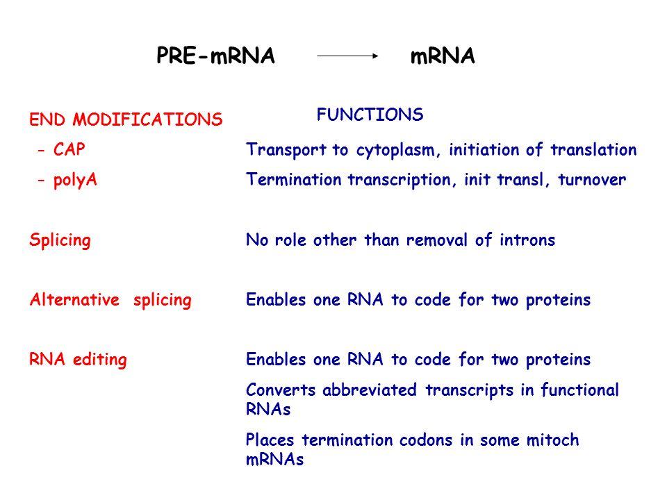 PRE-mRNA mRNA Transport to cytoplasm, initiation of translation