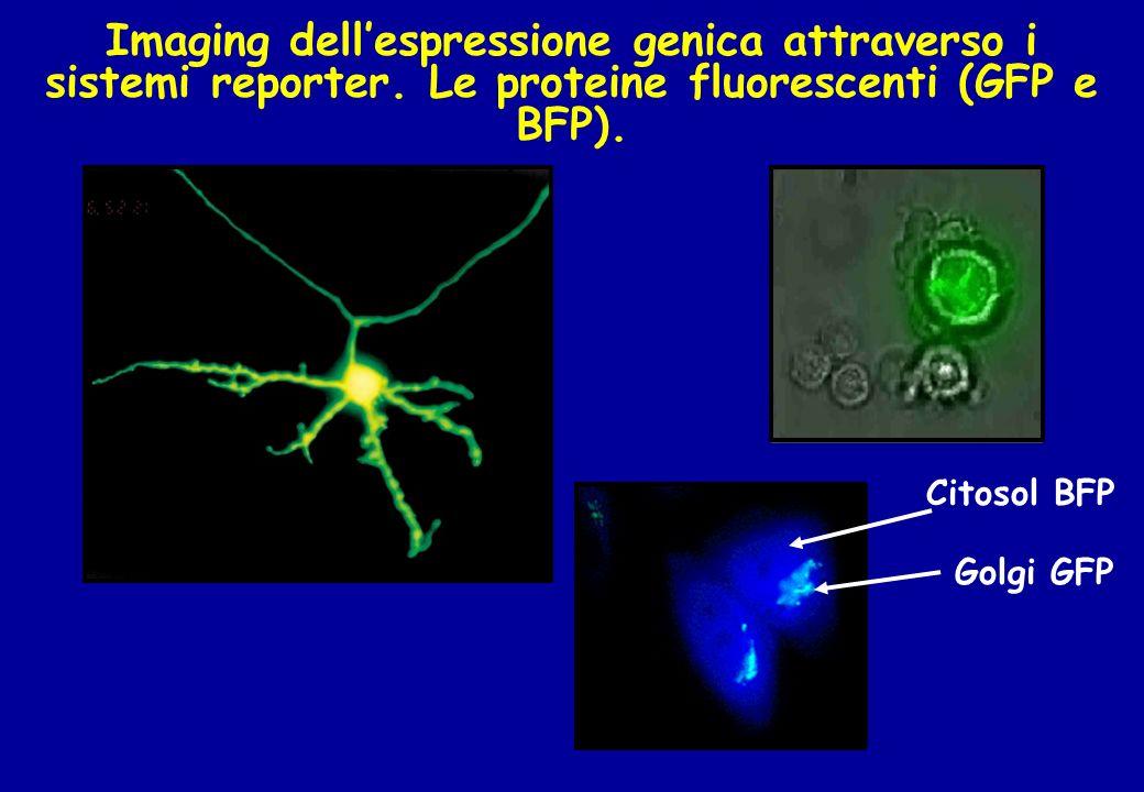 Imaging dell'espressione genica attraverso i sistemi reporter
