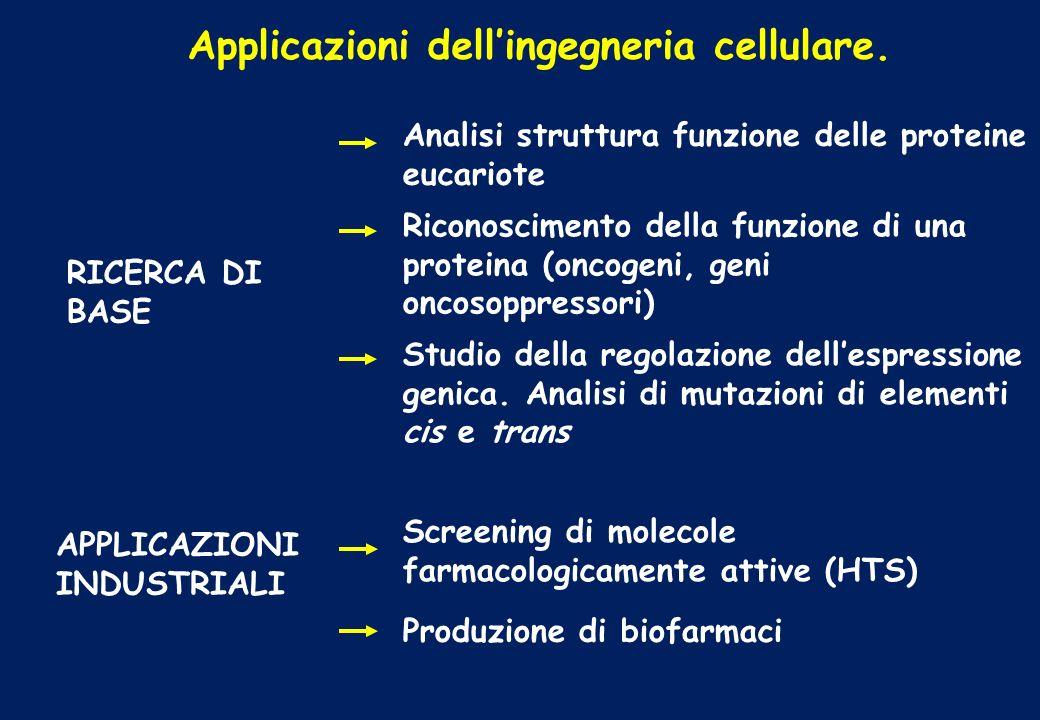 Applicazioni dell'ingegneria cellulare.