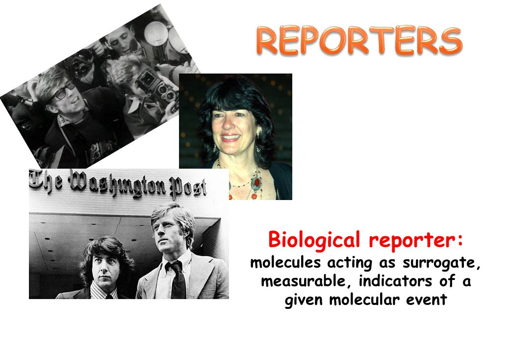 REPORTERSBiological reporter: molecules acting as surrogate, measurable, indicators of a given molecular event.