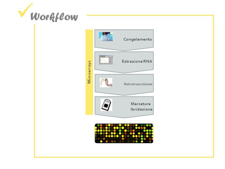 Workflow Congelamento Estrazione RNA Microarrays Marcatura Ibridazione