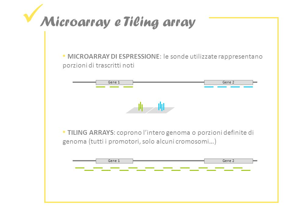 Microarray e Tiling array