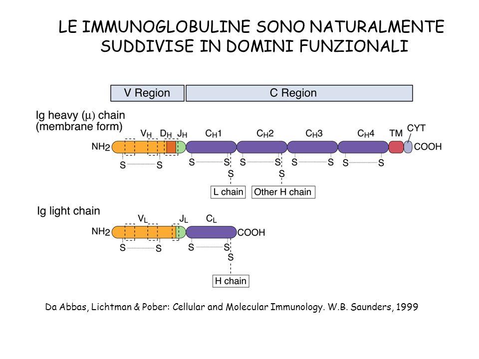 LE IMMUNOGLOBULINE SONO NATURALMENTE SUDDIVISE IN DOMINI FUNZIONALI