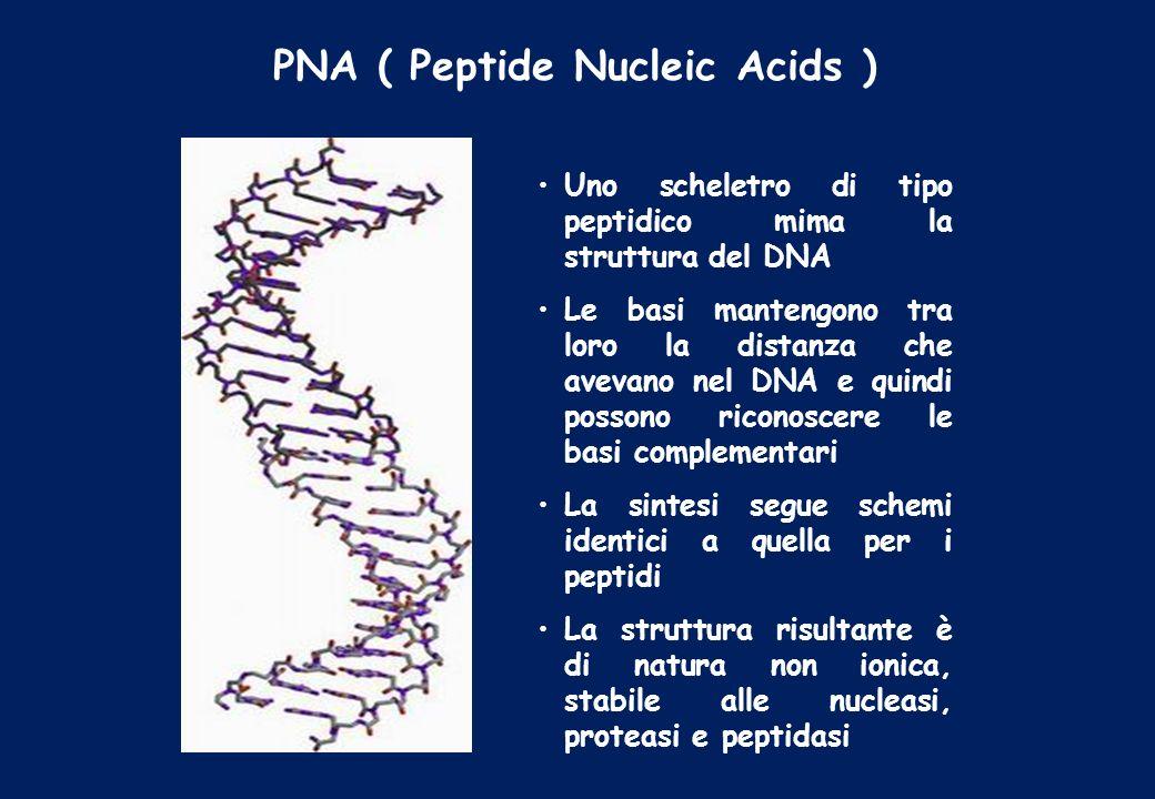 PNA ( Peptide Nucleic Acids )
