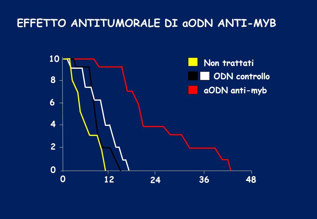 EFFETTO ANTITUMORALE DI aODN ANTI-MYB