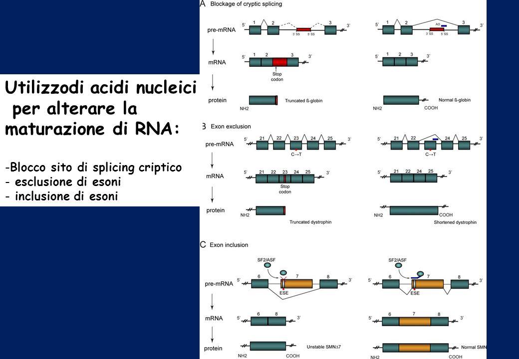 Utilizzodi acidi nucleici per alterare la maturazione di RNA: