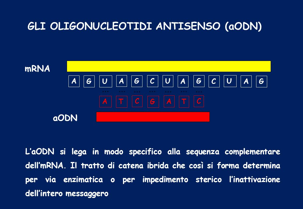 GLI OLIGONUCLEOTIDI ANTISENSO (aODN)