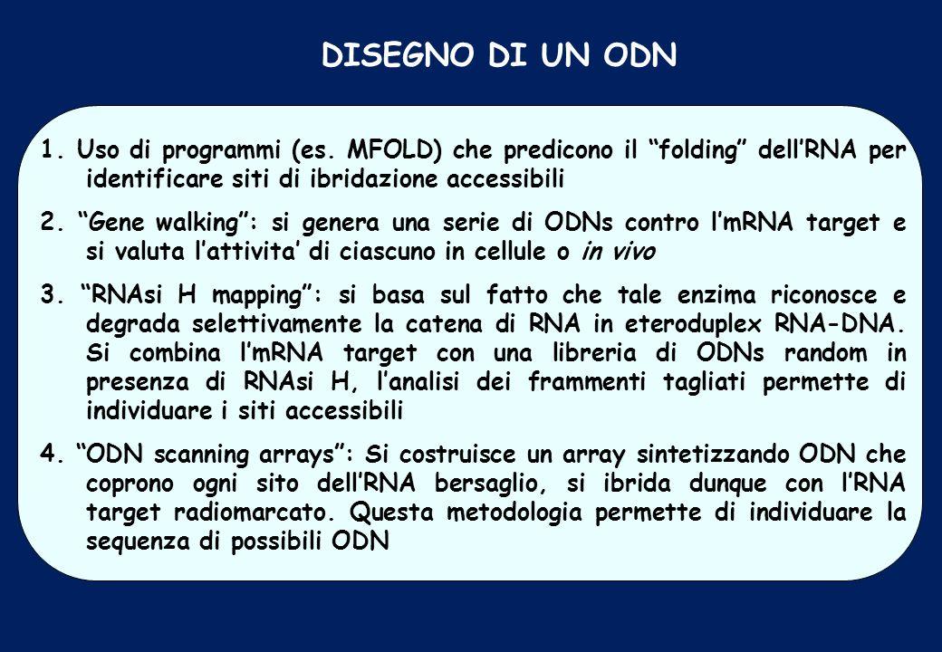 DISEGNO DI UN ODN 1. Uso di programmi (es. MFOLD) che predicono il folding dell'RNA per identificare siti di ibridazione accessibili.