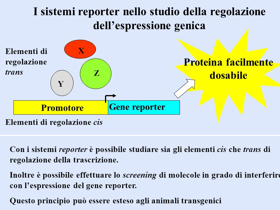 Proteina facilmente dosabile