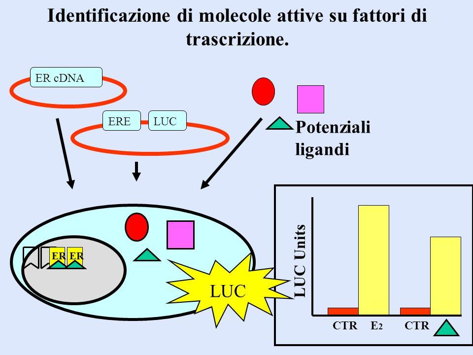 Identificazione di molecole attive su fattori di trascrizione.
