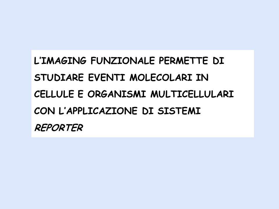L'IMAGING FUNZIONALE PERMETTE DI STUDIARE EVENTI MOLECOLARI IN CELLULE E ORGANISMI MULTICELLULARI CON L'APPLICAZIONE DI SISTEMI REPORTER