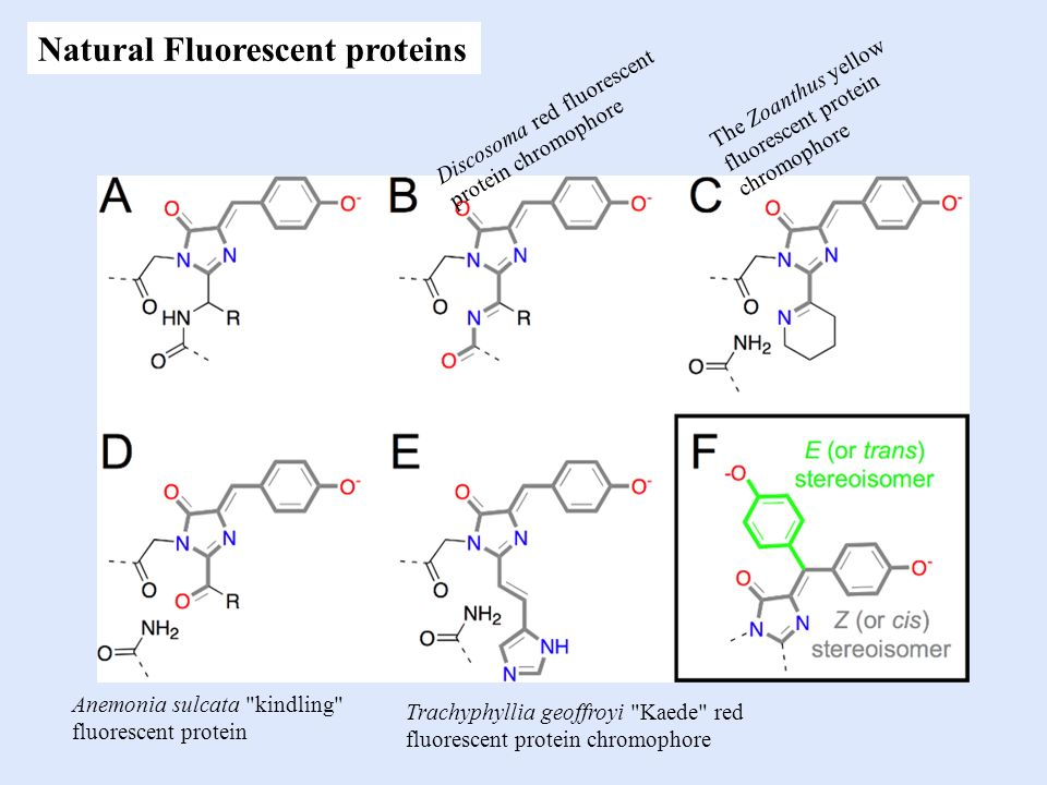 Natural Fluorescent proteins