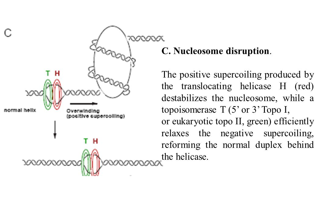 C. Nucleosome disruption.