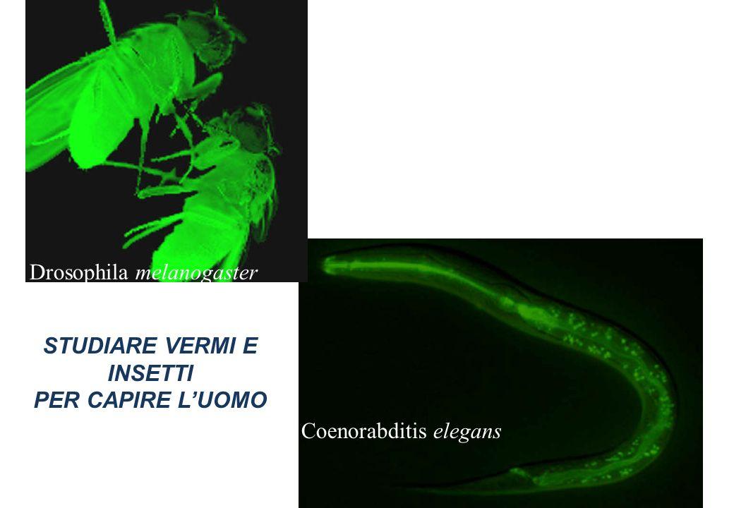 STUDIARE VERMI E INSETTI PER CAPIRE L'UOMO