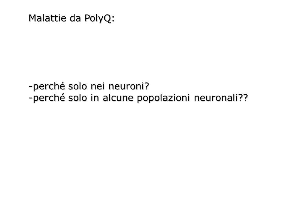 Malattie da PolyQ: -perché solo nei neuroni -perché solo in alcune popolazioni neuronali