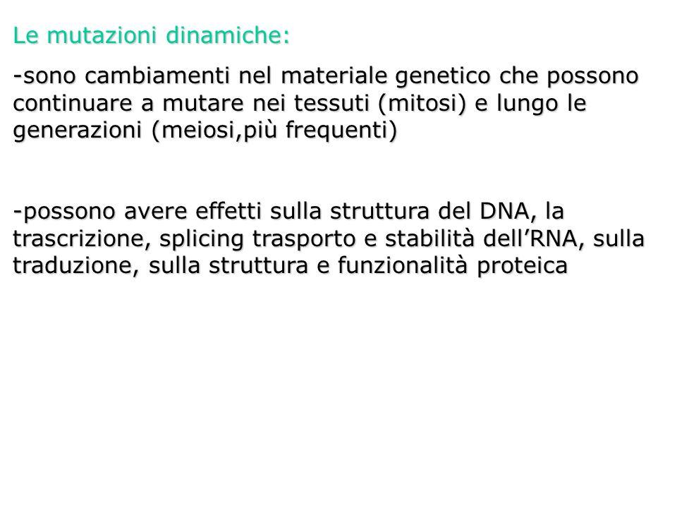 Le mutazioni dinamiche: