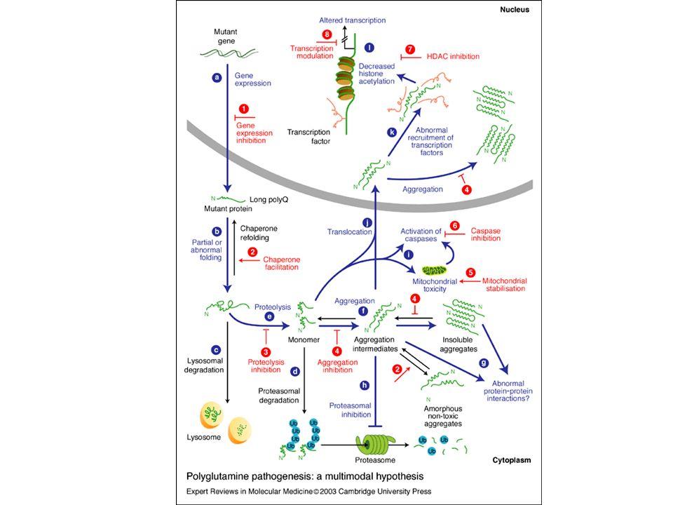 Figure 1. Polyglutamine pathogenesis: a multimodal hypothesis