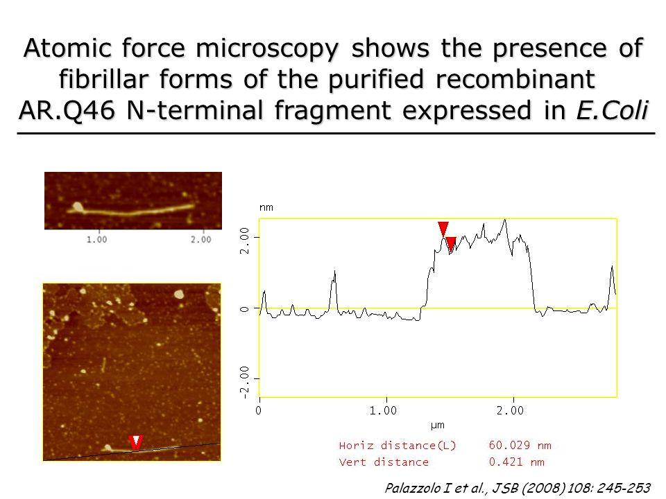 Atomic force microscopy shows the presence of