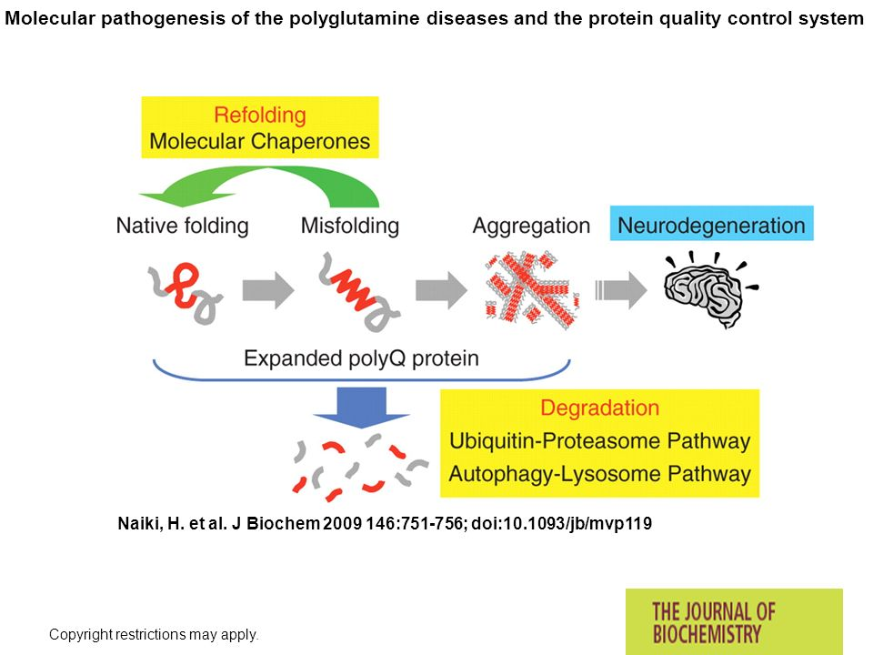 Molecular pathogenesis of the polyglutamine diseases and the protein quality control system