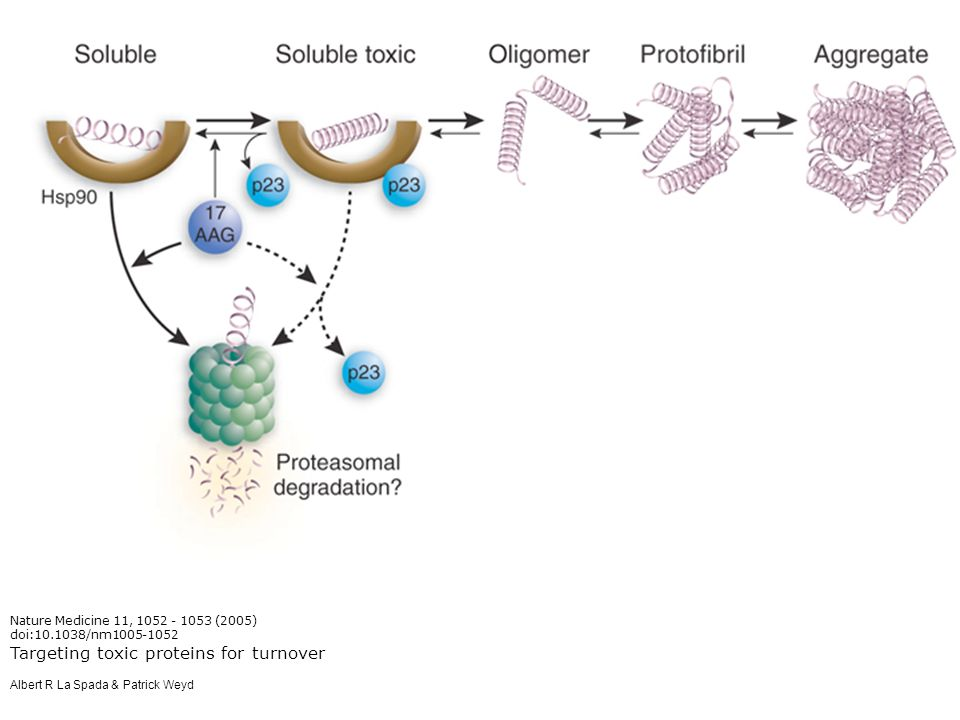 Targeting toxic proteins for turnover