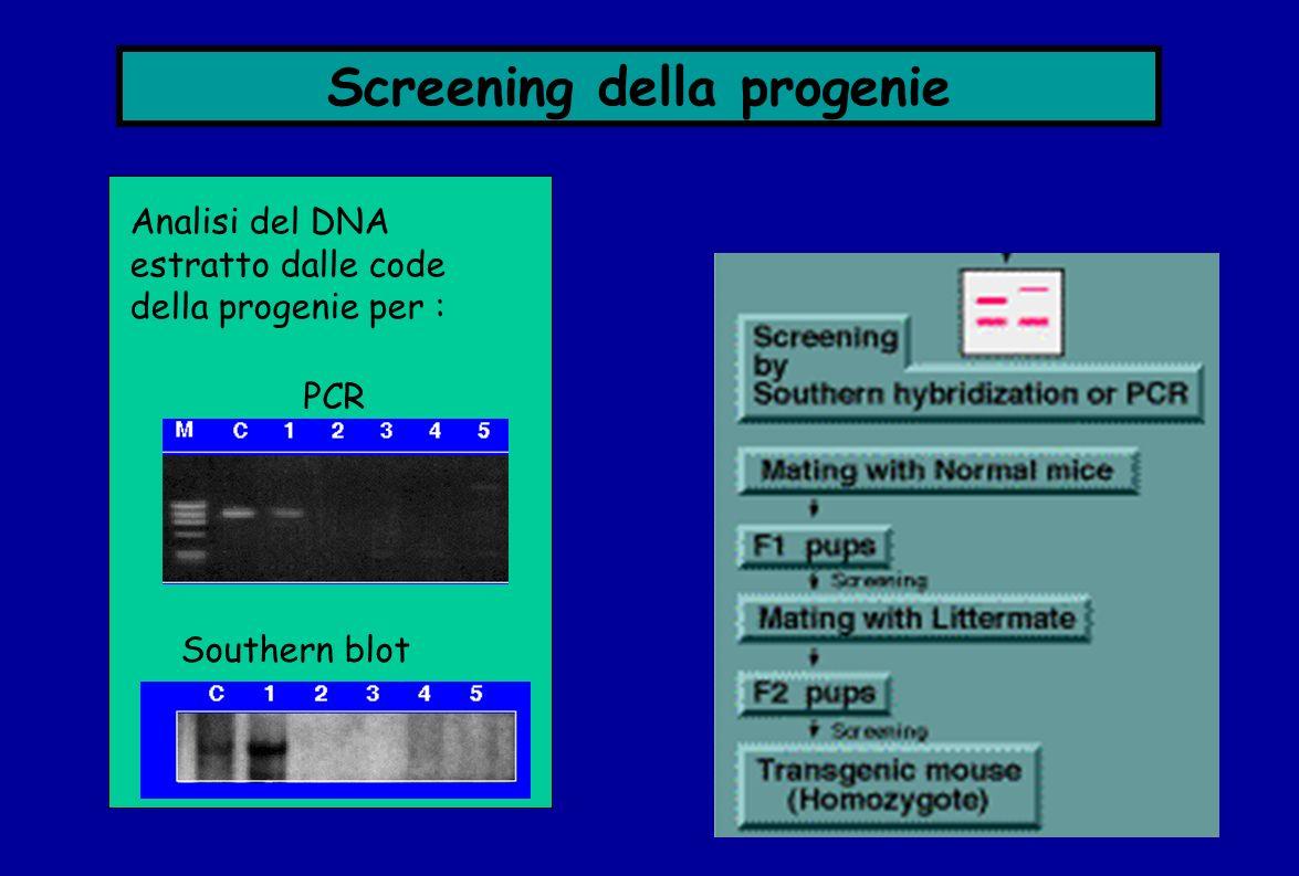 Screening della progenie