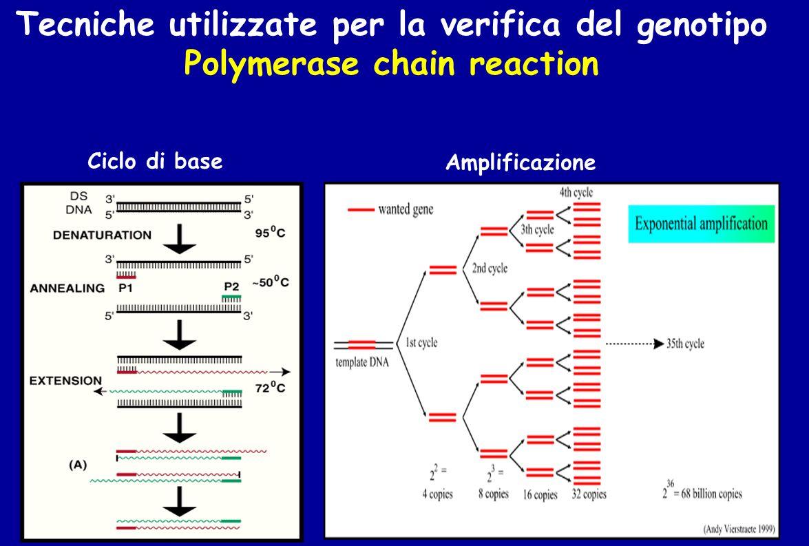 Tecniche utilizzate per la verifica del genotipo
