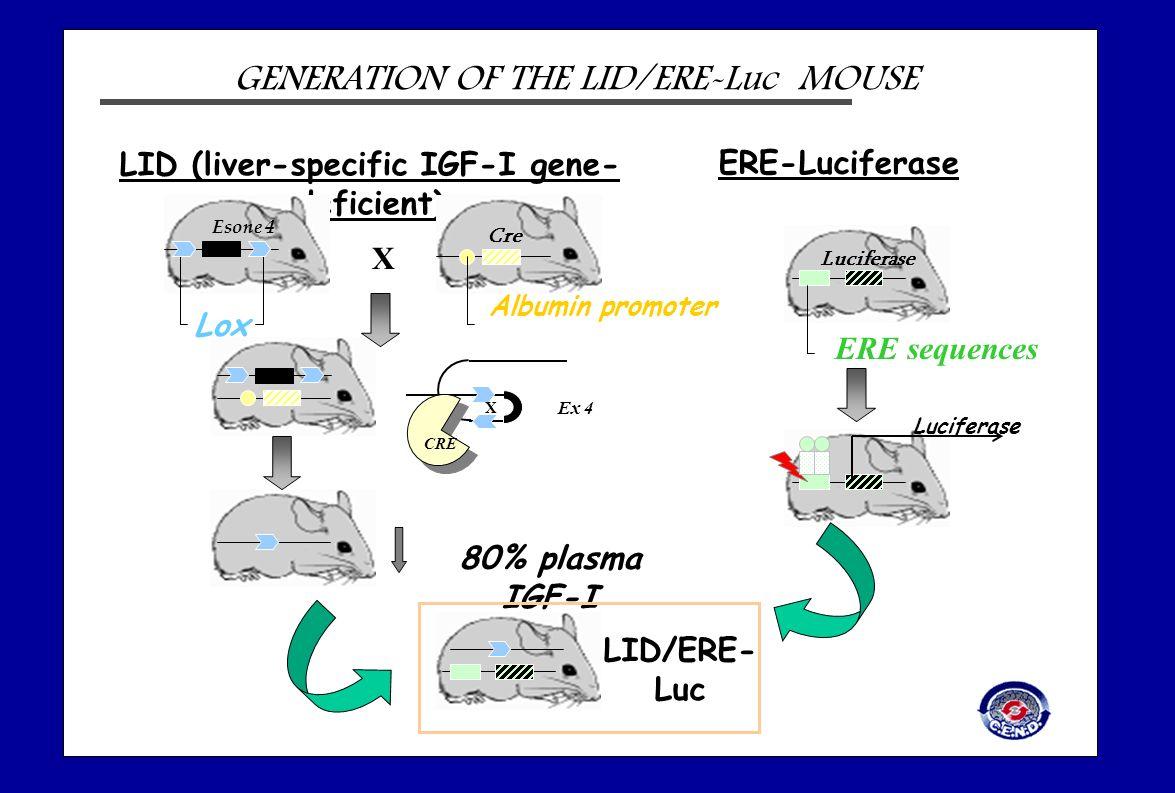 LID (liver-specific IGF-I gene-deficient)