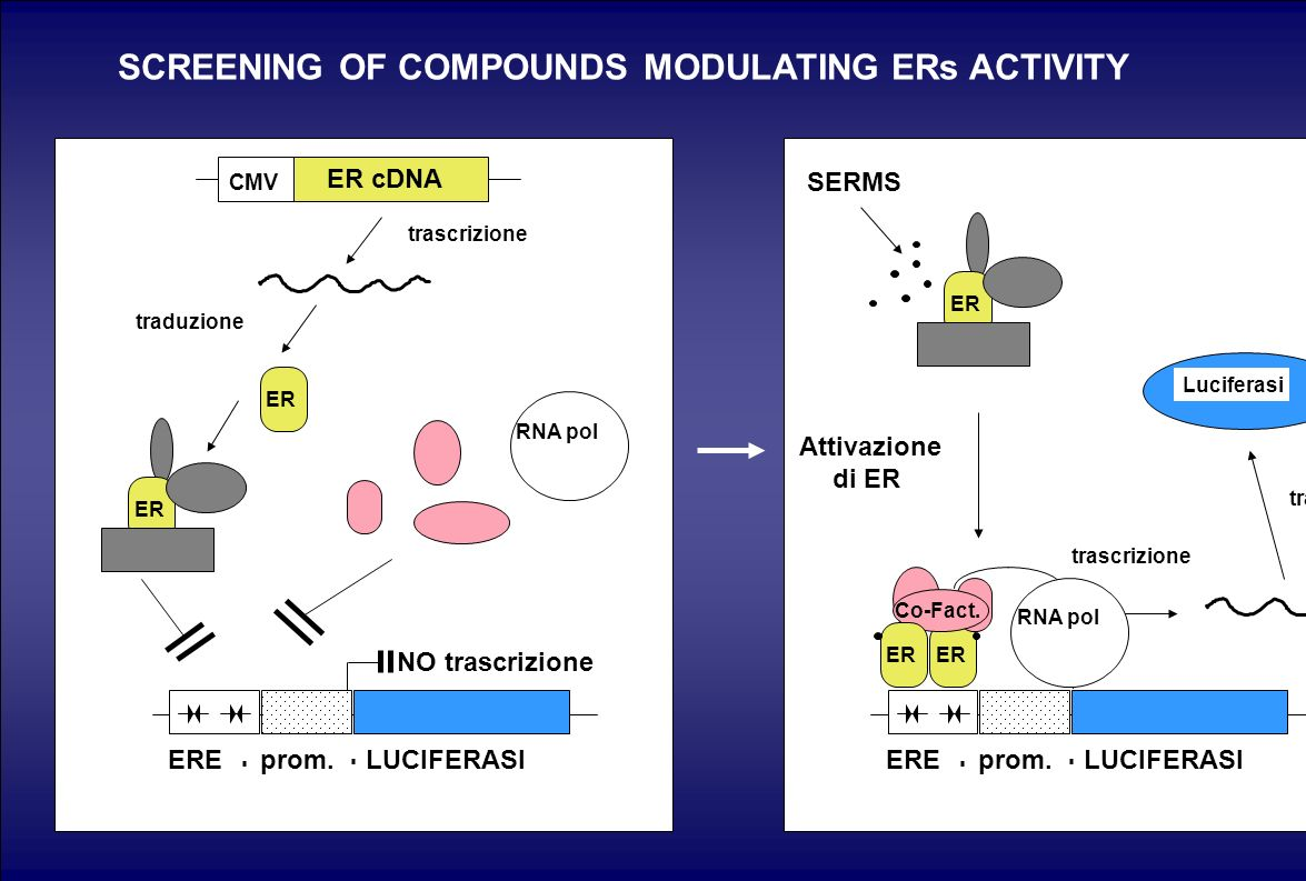 SCREENING OF COMPOUNDS MODULATING ERs ACTIVITY
