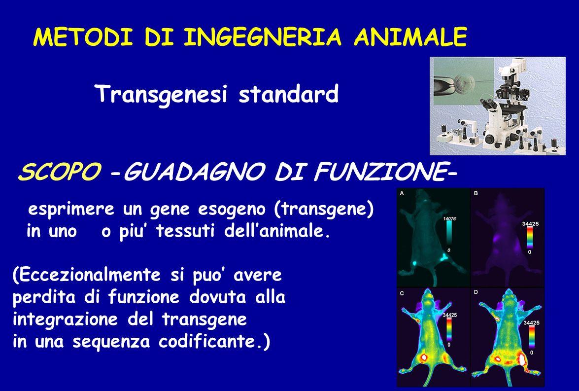 METODI DI INGEGNERIA ANIMALE Transgenesi standard
