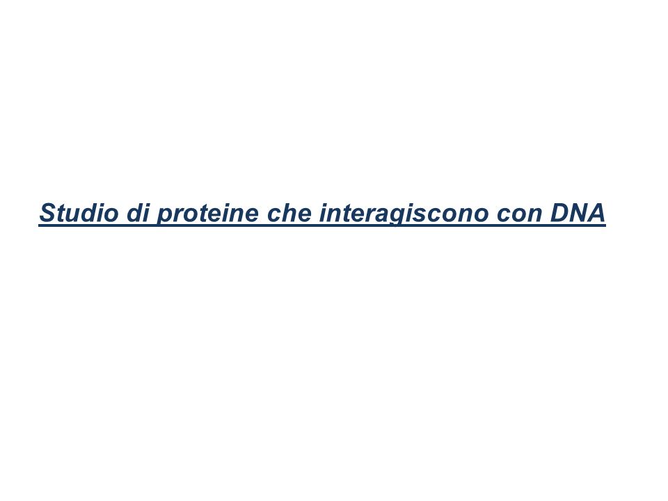 Studio di proteine che interagiscono con DNA