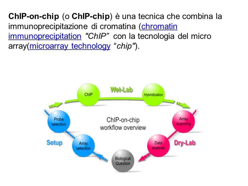 ChIP-on-chip (o ChIP-chip) è una tecnica che combina la immunoprecipitazione di cromatina (chromatin immunoprecipitation ChIP con la tecnologia del micro array(microarray technology chip ).