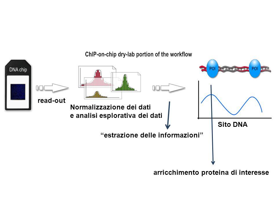 read-out Normalizzazione dei dati. e analisi esplorativa dei dati. Sito DNA. estrazione delle informazioni