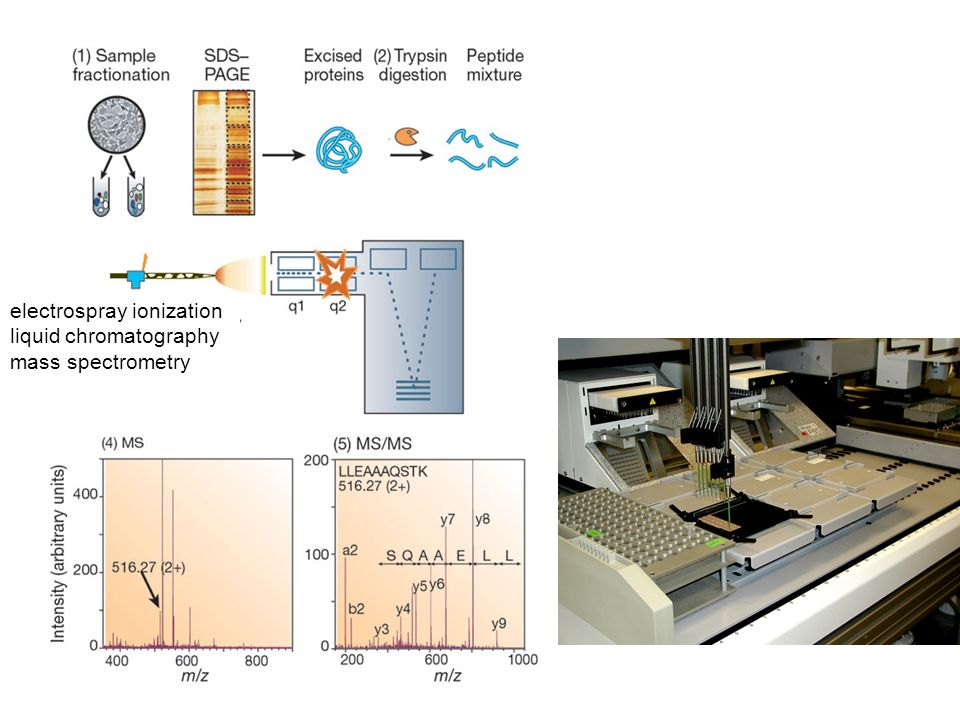 electrospray ionization liquid chromatography mass spectrometry