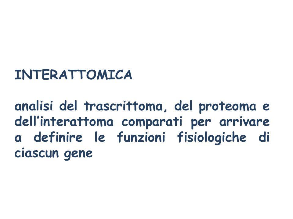 INTERATTOMICAanalisi del trascrittoma, del proteoma e dell'interattoma comparati per arrivare a definire le funzioni fisiologiche di ciascun gene.
