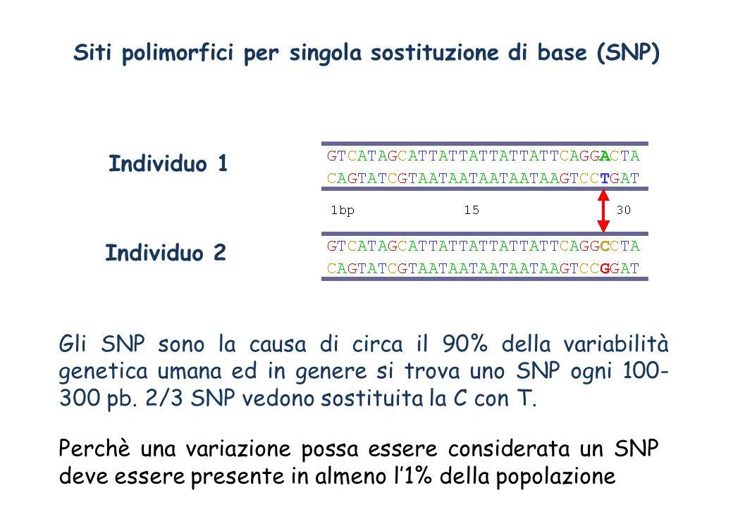 Siti polimorfici per singola sostituzione di base (SNP)
