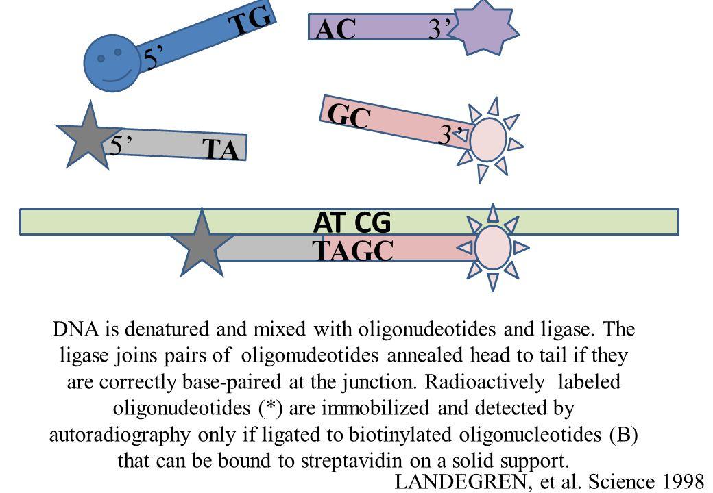 LANDEGREN, et al. Science 1998