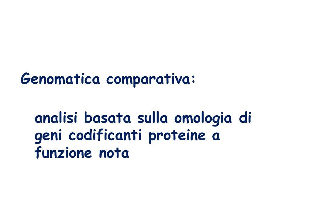 Genomatica comparativa: