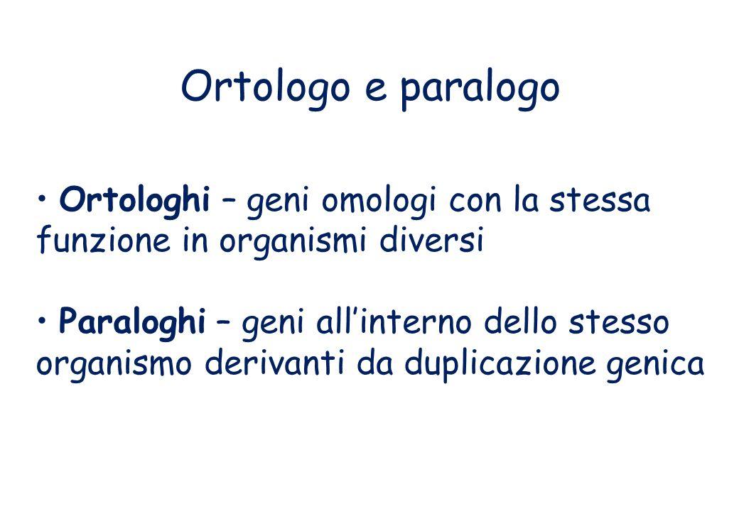 Ortologo e paralogo Ortologhi – geni omologi con la stessa